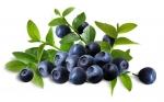 Удивительные свойства черники для здоровья: регулярное употребление в пищу черники может замедлить старение, улучшить зрение и память.