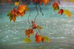 В Украину идет дорогая осень